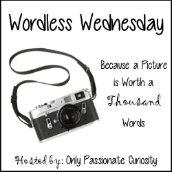 Wordless Wednesday – August 7, 2013